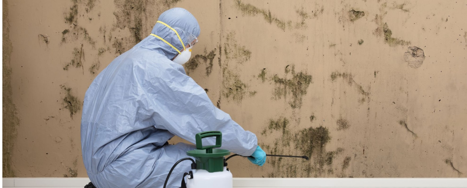 Mould Removal Melbourne